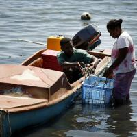 Taking fish to market. Solomon Islands 2007